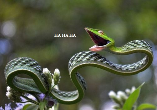6 HAHAHA awesome snake laugh laughing humor funny LOL smile amazing amazon andy mcparrot.jpg