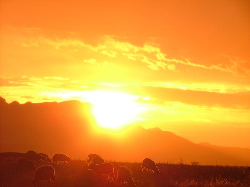 Original sunsetaps.jpg