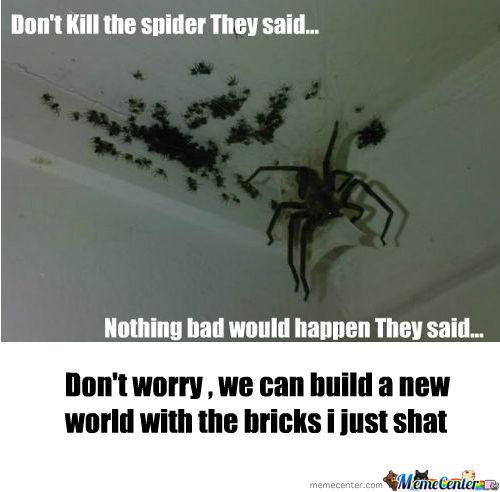 rmx-spiders_o_410931.jpg