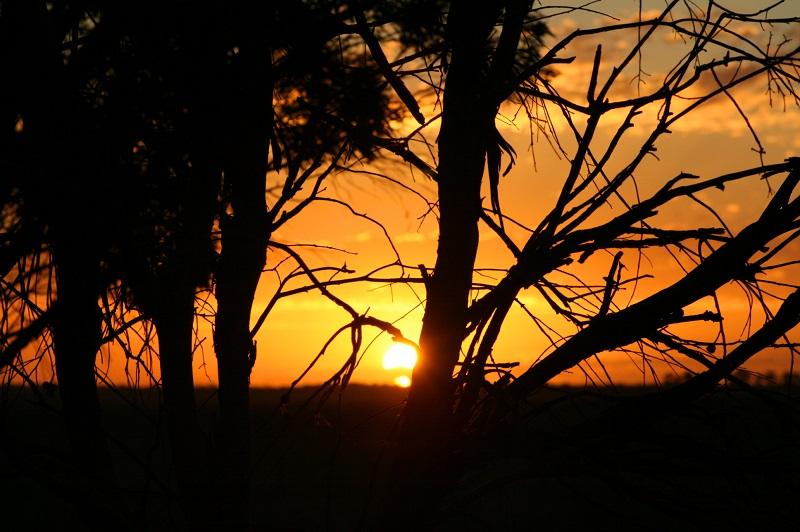 sunsetthroughtreesaps.jpg
