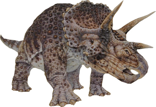 The-Triceratops-Never-Existed-It-Was-Actually-a-Young-Version-Of-Another-Dinosaur-Dinosaur_e-cnt.jpg